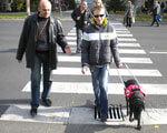 Чотирилапі «очі» – Закарпатців із вадами зору вперше супроводжуватимуть собаки-поводирі ВАДАМИ ЗОРУ КІНОЛОГИ НЕЗРЯЧИХ ПОВОДИРЯМИ СОБАКА-ПОВОДИР