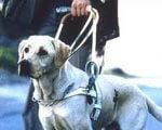 1 28 s419x0-news-1329018322 2. вадами зору, незрячих, собак-поводирів, інвалідів