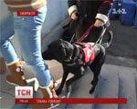 В Ужгороді з'явиться перший в Україні центр підготовки собак-поводирів (ВІДЕО) СОБАК-ПОВОДИРІВ