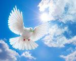 1 26 7 dove-of-peace 2. інвалідів