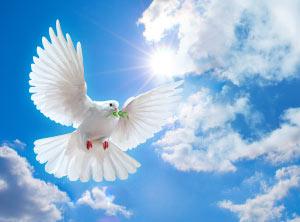 1 26 7 dove-of-peace 1