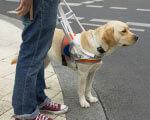 1 29 5 povodyr 818a0 2. вадами зору, собак-поводирів, інвалідністю