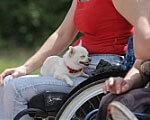1 20 6 711793 200 2. инвалид, особливими потребами
