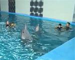 Дети с ДЦП: дельфинотерапия в подарок (ВИДЕО)