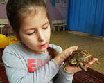 Новий вид терапії – у Центрі соціальної реабілітації дітей-інвалідів м. Ковеля. ковель, діти-інваліди, зоотерапія, оздоровлення, реабілітація, person, indoor, floor, little, boy, food, baby, reptile, turtle, toddler. A little boy that is holding a stuffed animal