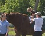 Боєць АТО зводить центр реабілітації для дітей з ДЦП (ВІДЕО). волинь, дцп, боєць ато, критий манеж, іпотерапія, tree, outdoor, person, animal, mammal, horse, riding. A person riding a horse