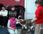У Чернівцях дітей з інвалідністю лікували хаскі (ВІДЕО). чернівці, заняття, канистерапия, лікування, інвалідність, person, clothing, dog, carnivore, animal, toddler, baby, human face, mammal. A group of people sitting around a dog