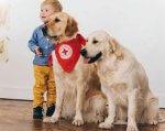 У Луцьку собаки-«терапевти» даруватимуть радість особливим людям. луцьк, канистерапия, лікування, особливими потребами, проект, dog, carnivore, standing, animal, indoor, posing, golden retriever. A person and a dog posing for the camera