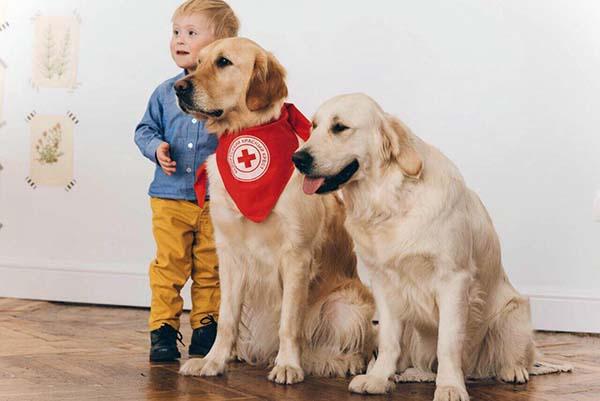 У Луцьку собаки-«терапевти» даруватимуть радість особливим людям