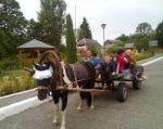 Особое внимание на Сумщине. монтессори-терапия, сумщина, гидрокинезитерапия, инвалидность, иппотерапия, road, sky, outdoor, tree, street, pulling, animal, drawn, carriage, land vehicle. A person riding a horse drawn carriage