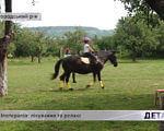 Іпотерапія: лікування та релакс (ВІДЕО). ужгородський р-н, лікування, релакс, санаторій малятко, іпотерапія, tree, grass, outdoor, animal, mammal, stallion, riding, equestrianism, mare, horse. A person riding a horse in a field