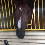 Світлина. Іпотерапія: як коні лікують тіло і заспокоюють душу людей. Реабілітація, лікування, заняття, іпотерапія, корекція, кінь