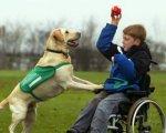 ЛКП «Лев» виховуватиме собак-терапевтів для реабілітації людей з інвалідністю. лкп лев, львів, канистерапия, собака-терапевт, інвалідність, grass, dog, outdoor, animal, carnivore. A dog jumping in the air
