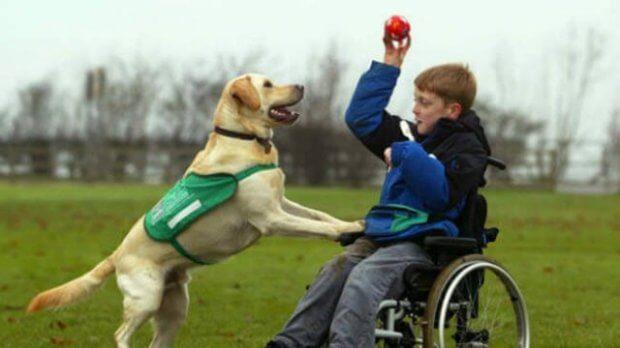 ЛКП «Лев» виховуватиме собак-терапевтів для реабілітації людей з інвалідністю. лкп лев, львів, канистерапия, собака-терапевт, інвалідність