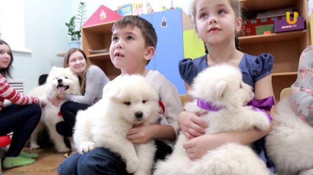 На Буковині відкрили реабілітаційний табір: дітей з ДЦП лікуватимуть за допомогою собак. чернівецька область, канистерапия, собака-терапевт, табір, інвалідність