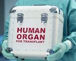 С чужим органом в теле: как живут запорожцы после трансплантации. конференция, орган, пересадка, почка, трансплантация, person, outdoor. A man standing in front of a car
