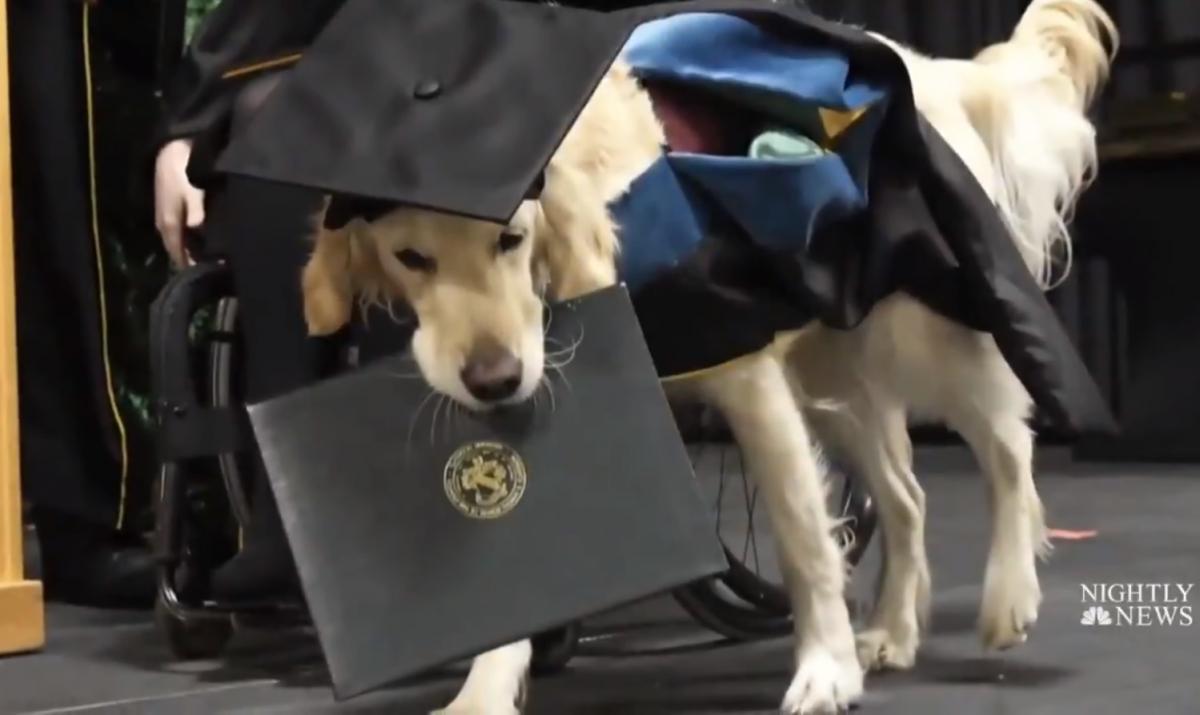 Вмикає світло та подає речі: у США собака-поводир отримав диплом магістра разом із хазяйкою (ВІДЕО)