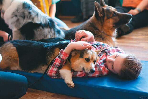 У Кременчуці розшукують волонтерів і добрих собак. кременчук, волонтер, проект ангел анімалз україни, собака, тренинг