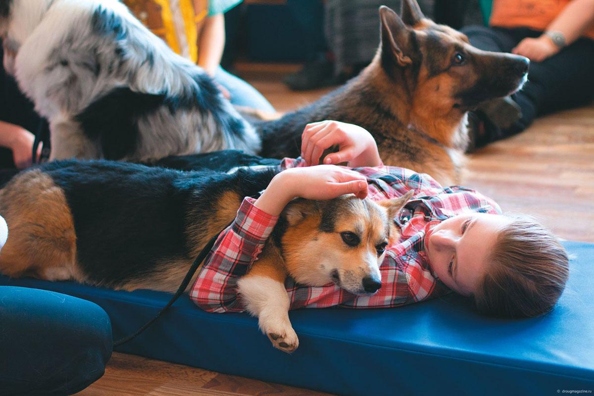 У Кременчуці розшукують волонтерів і добрих собак