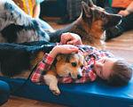 У Кременчуці розшукують волонтерів і добрих собак. кременчук, волонтер, проект ангел анімалз україни, собака, тренинг, dog, carnivore, indoor, animal, puppy, cute, dog breed, pet, lap. A dog lying on a blue surface