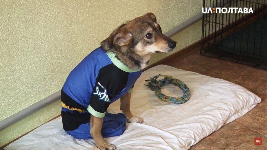 Лікуванням та реабілітацією за допомогою собак – займається полтавка Ельвіра Попова (ВІДЕО). полтава, аутизм, канистерапия, лікування, інвалідність, dog, indoor, carnivore, animal, bed, puppy, dog breed, mammal. A dog sitting on a bed