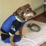 Лікуванням та реабілітацією за допомогою собак – займається полтавка Ельвіра Попова (ВІДЕО)