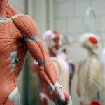 Вчені відкрили невідоме м'язове захворювання: вражає людей середнього віку