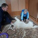 Світлина. Як собака «лікує» особливих діток у Центрі реабілітації в Чернівцях. Реабілітація, інвалідність, Чернівці, канистерапия, собака, взаємодія