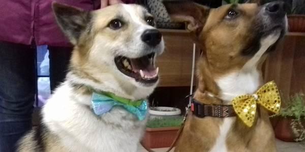 Зіркові собаки відвідали київських дітей з інвалідністю (ФОТО)