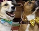 Зіркові собаки відвідали київських дітей з інвалідністю (ФОТО). дзиґа, київ, укроп, канистерапия, собака