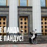 В Киеве панда тестирует пандусы: что известно о проекте (ФОТО, ВИДЕО)