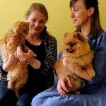 У Тернополі собака й кіт працюють каністерапевтами (ВІДЕО)