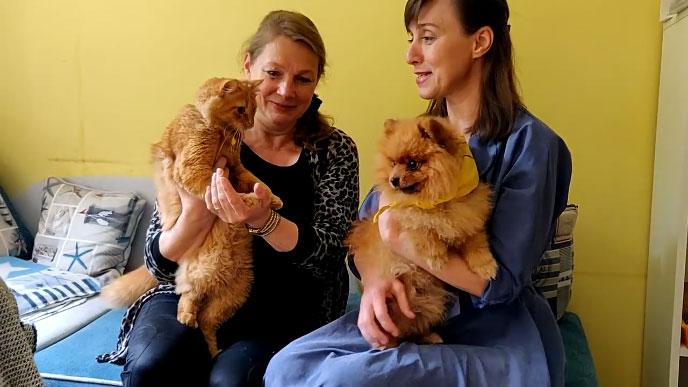 У Тернополі собака й кіт працюють каністерапевтами (ВІДЕО). тернопіль, каністерапевт, кіт, собака, інвалідність