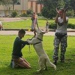 У Львові для дітей з інвалідністю проводять терапію із собаками