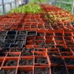 Світлина. Тепличне господарство на Вінниччині: молоді люди з інвалідністю вирощують квіти, зелень, пряні трави, овочі та розсаду. Робота, інвалідність, проект, соціалізація, Вінниччина, тепличне господарство