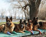 Чотирилапі лікарі: підопічні черкаського клубу собаківництва працюють реабілітологами з особливими дітьми. черкаси, канистерапия, клуб собаківництва, реабілітолог, собака