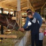 Іпотерапія та реабілітація з допомогою тварин відтепер доступні на Кременеччині (ФОТОРЕПОРТАЖ)