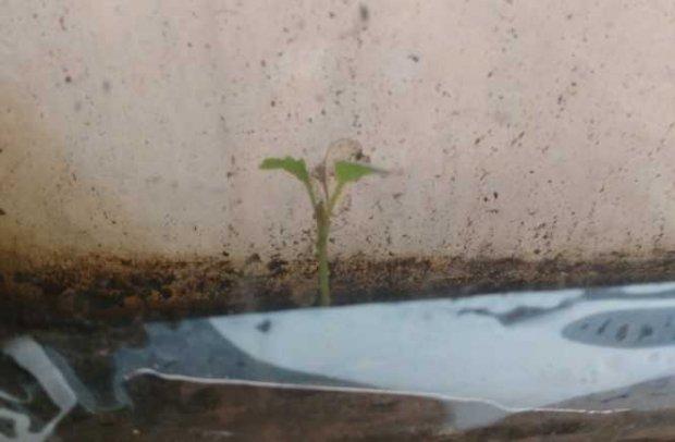 Мікрозелень у руках «сонячних діток»: історія соціального проєкту у Харкові. харків, карантин, мікрозелень, проєкт паростки майбутнього, синдром дауна