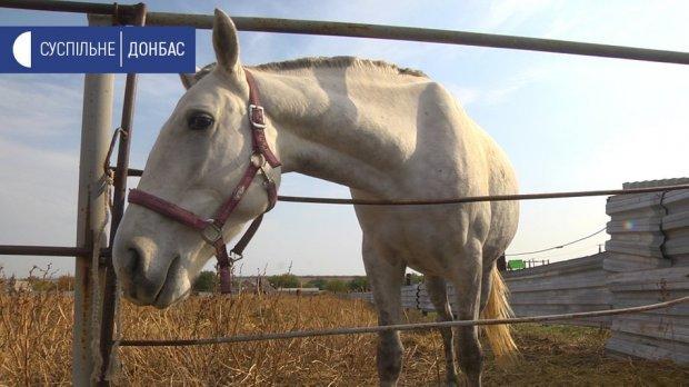 На Донеччині проводять безкоштовні сеанси іпотерапії. донеччина, кінь, розвиток, інвалідність, іпотерапія