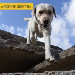У Тернополі для дітей проводять сеанси каністерапії - лікування за участі собак