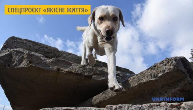 У Тернополі для дітей проводять сеанси каністерапії – лікування за участі собак. тернопіль, дофамін, канистерапия, лікування, інвалідність