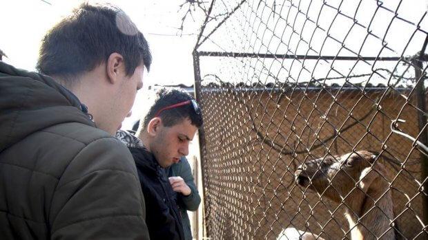 У Чернівцях молодь з інвалідністю вчать доглядати за тваринами. чернівці, догляд, соціалізація, тварина, інвалідність