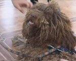 У Маріуполі працює дипломований собака-психолог (ВІДЕО). мариуполь, вади слуху, собака-психолог, терапевт, інвалідність