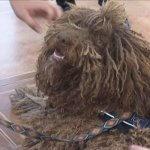 У Маріуполі працює дипломований собака-психолог (ВІДЕО)