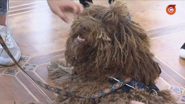 У Маріуполі працює дипломований собака-психолог. мариуполь, вади слуху, собака-психолог, терапевт, інвалідність
